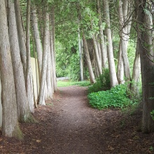 Path of trees Mackinac Island Trail