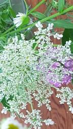 Weedy Beauty…
