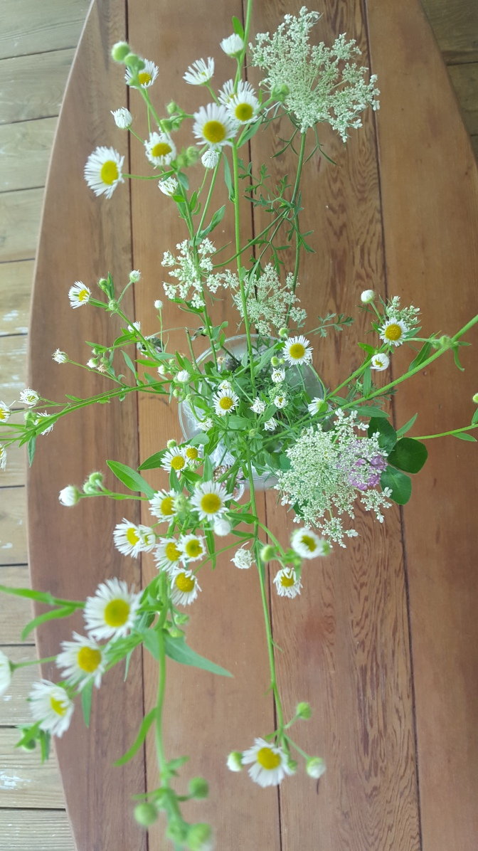 august wild flowers 2