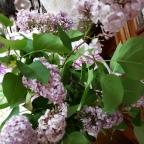 Lilac memories…